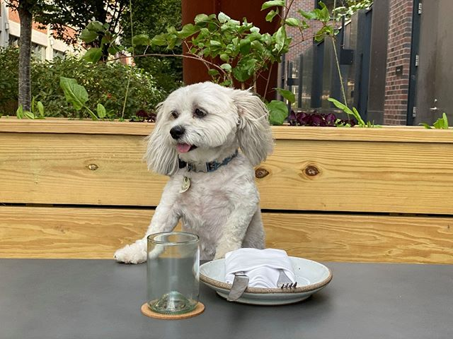 Coming out to the Yards Tonight for All Doggos Eve? Enjoy pet costume contests, a parade, on-site pet adoption and more. Did you know that our patio is pet-friendly? Bring your fur baby to dinner tonight while you enjoy some of our fall favorites like Duck Confit and Buttermilk dumplings.  #shillingcanningcompany #sourcedwithcare #madewithcare #IGDC #IGRSDC #navyyard #dogsofdc