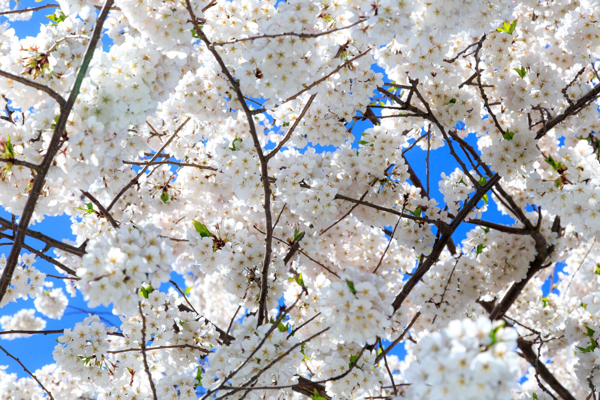 2015.05-may-120.jpg