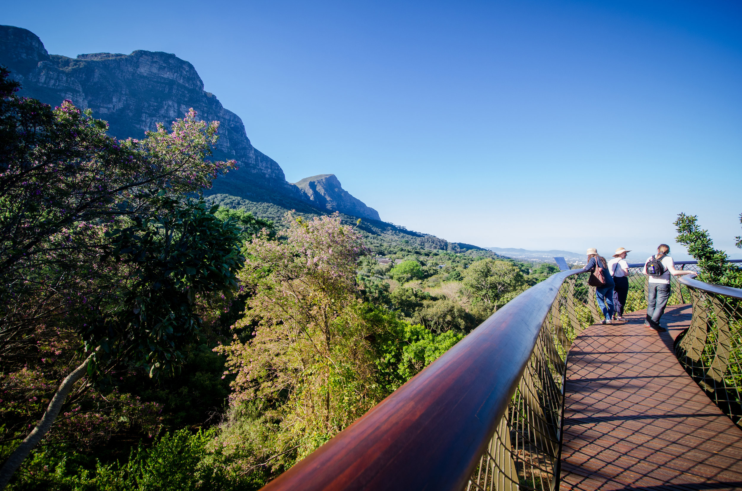 Visitors enjoy the Boomslag at Kirstenbosch.jpg