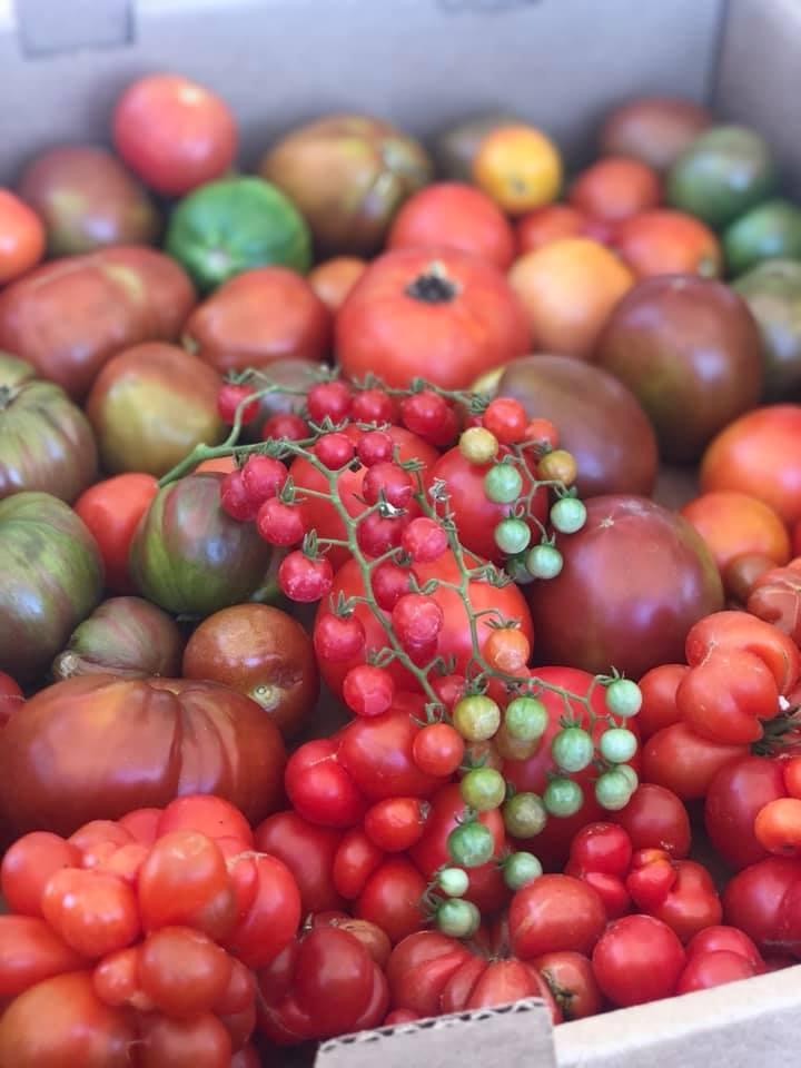 Sunday Asado Farm Tomatoes.jpg