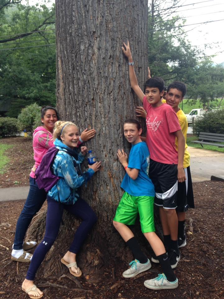 Montreat tree.jpg