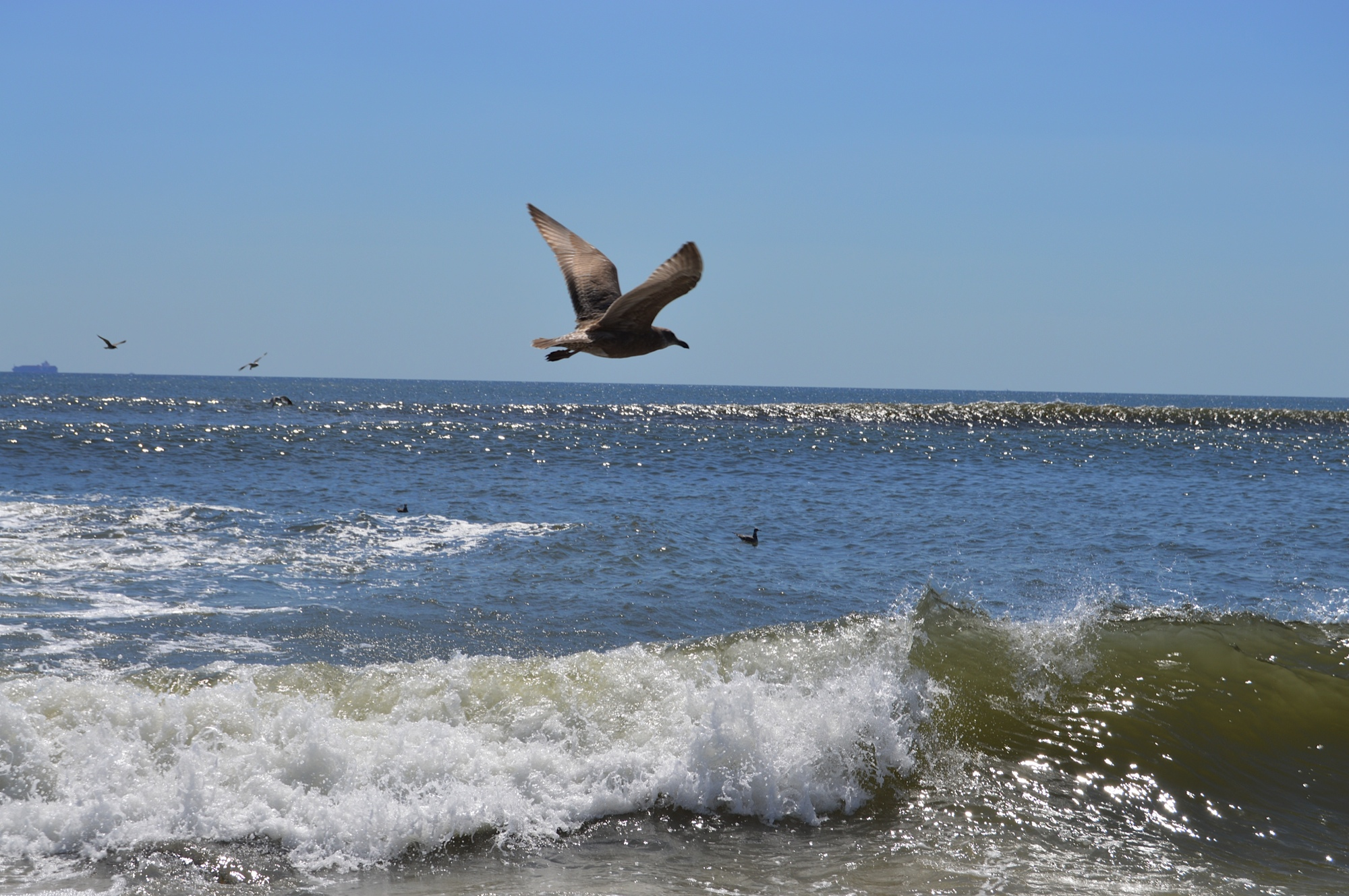Fort Tilden Beach Bird 8-2014.JPG