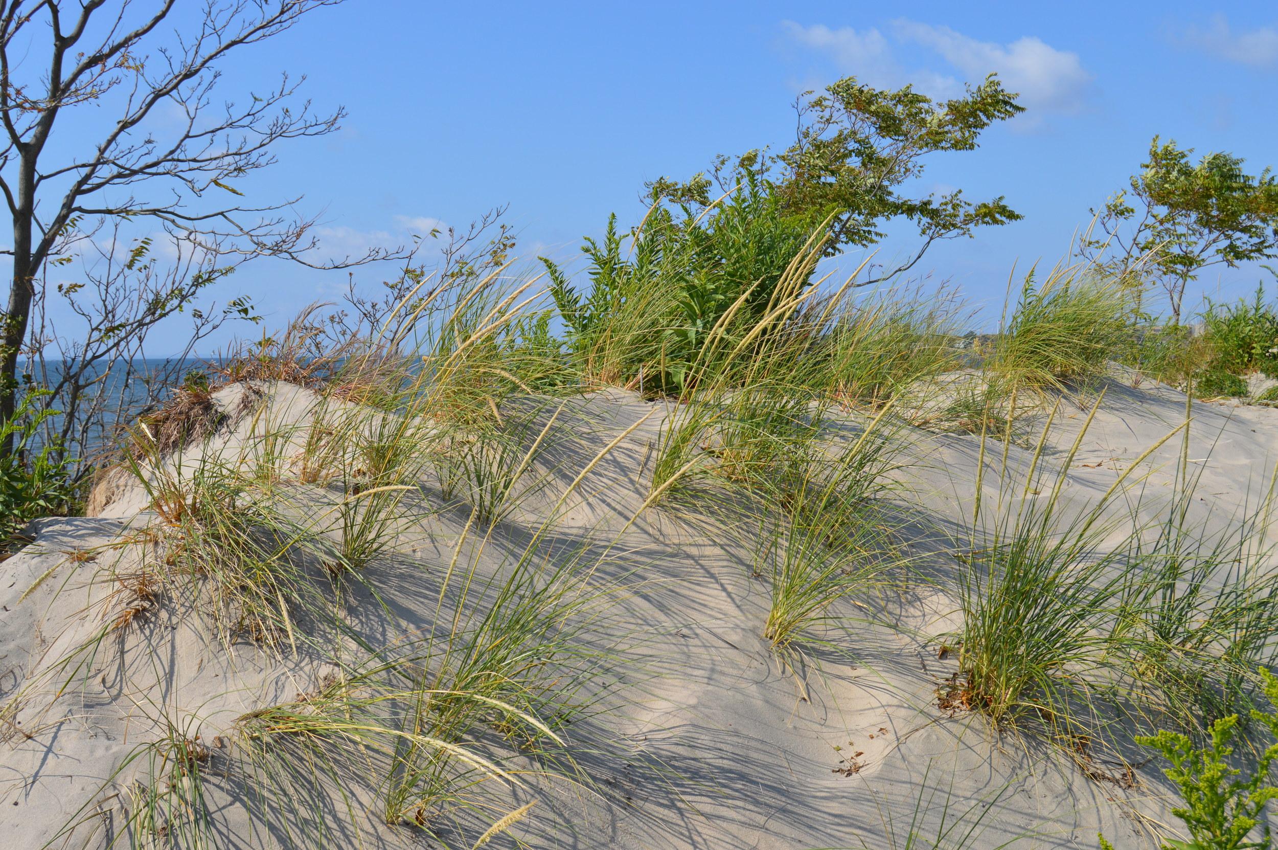 Plumb Beach Dune 9-20-2014.JPG