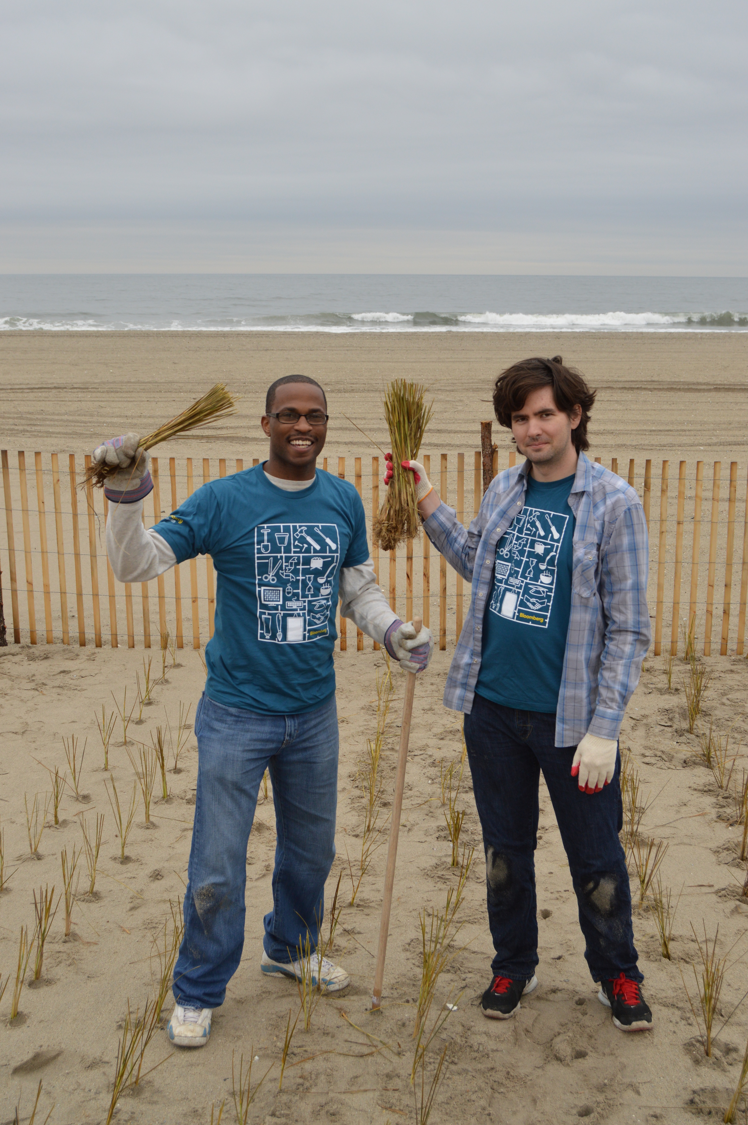 Volunteers plant over 20,000 beach grass culms along the Rockaway dunes.