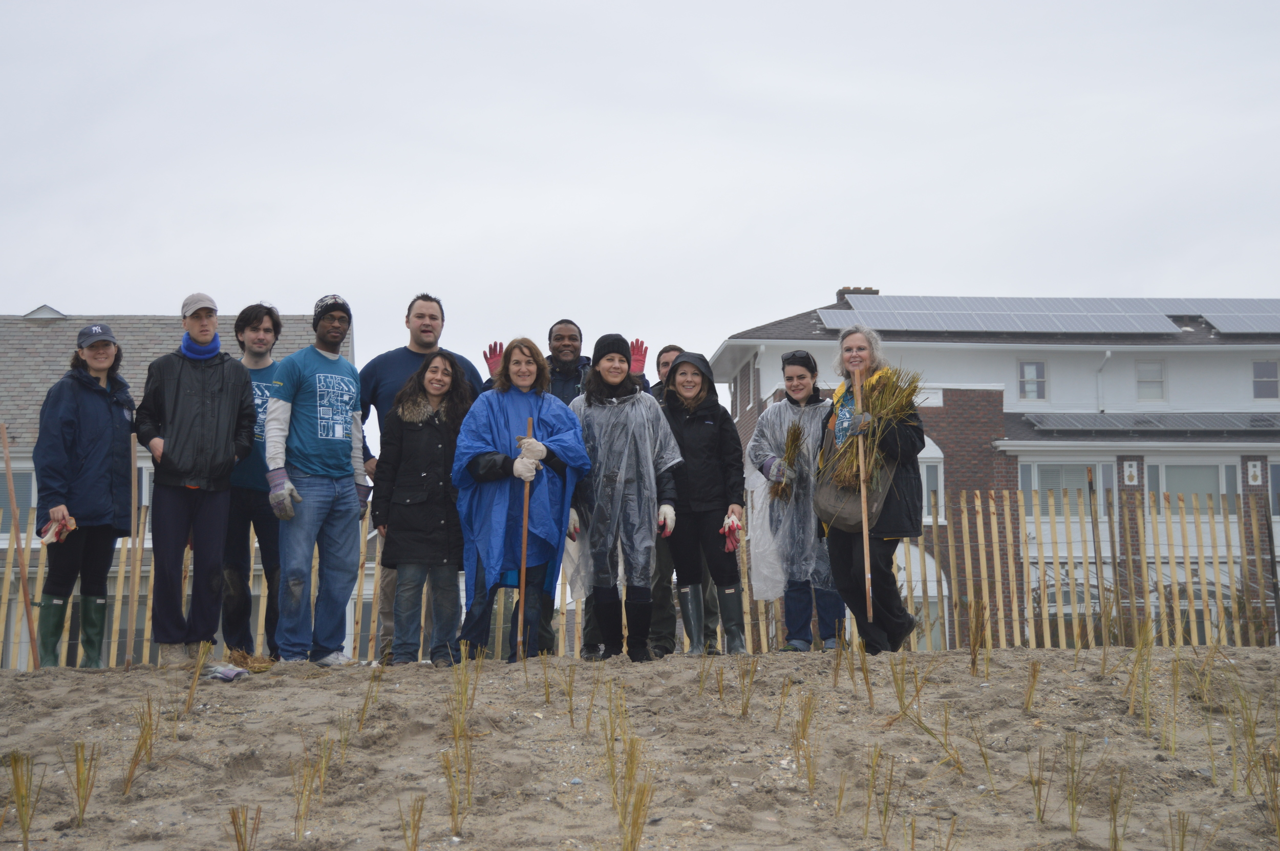 Volunteers help to stabilize the shoreline by planting beach grass on the Rockaway dunes.