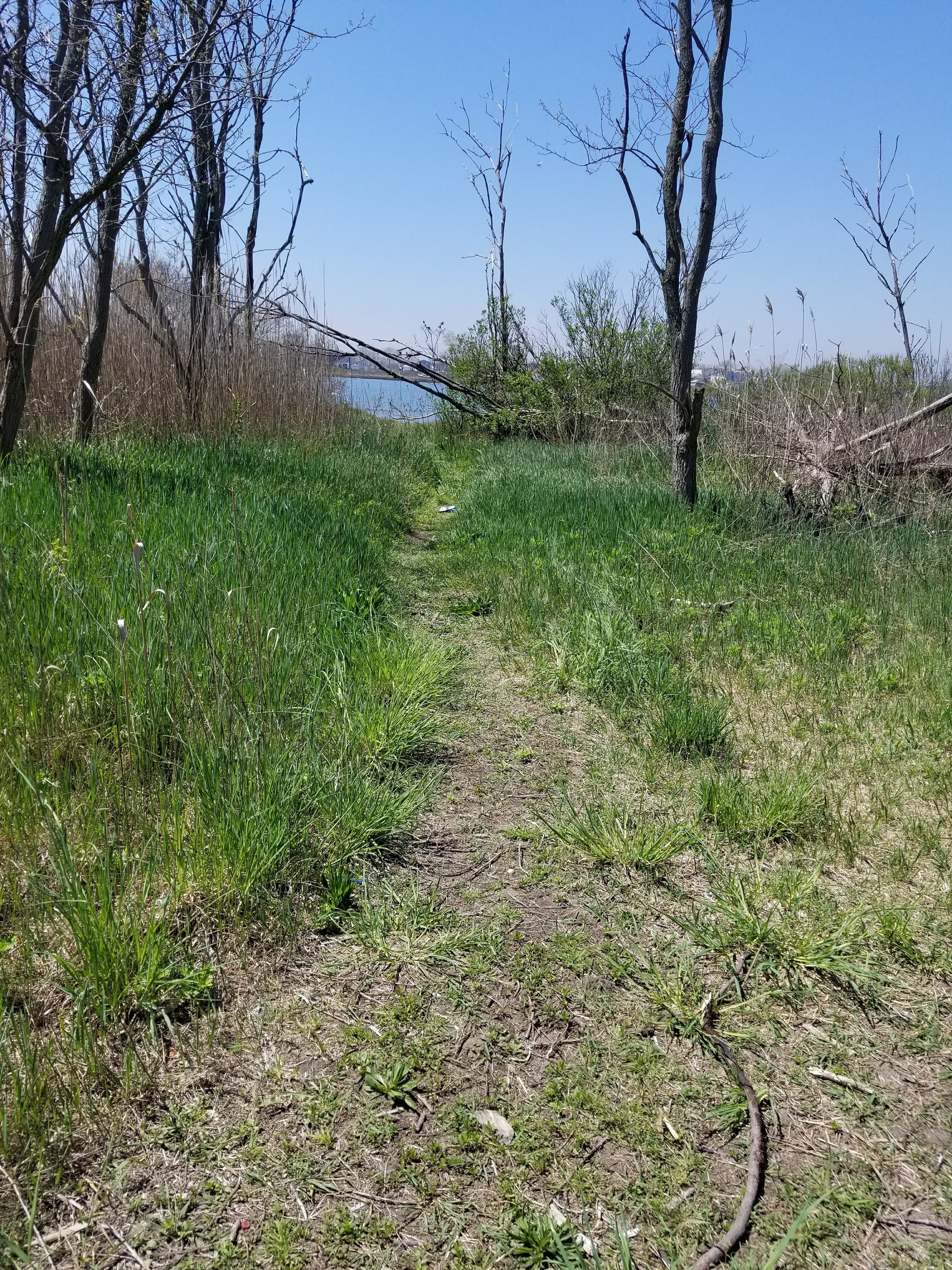 One mile of trail in Bayswater Park will be improved, enhancing public access and the user experience.