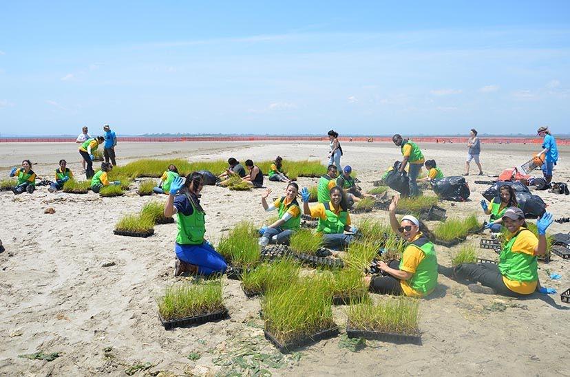 Marsh Planting Vols.jpg