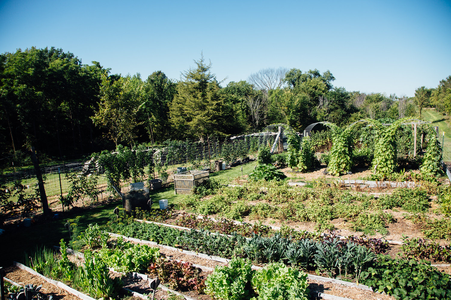 Rows of veggie are surrounded by large trellises of Cucumbers and Squash, and natural mulch.