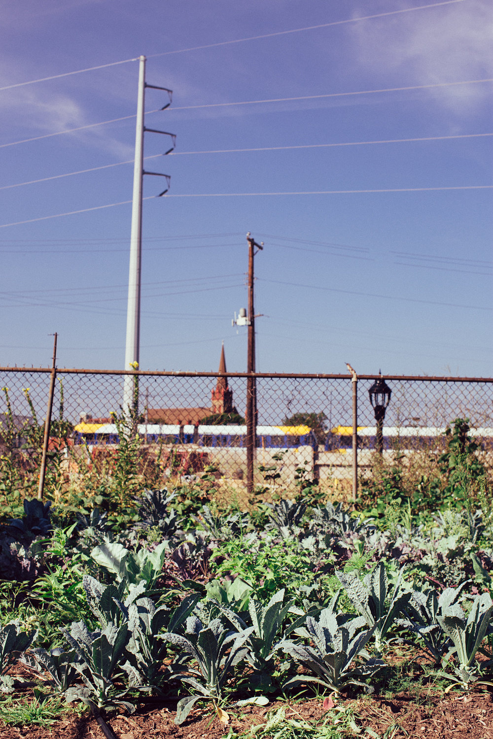 """""""It's interesting that people say farming doesn't belong in the city. They look at it as this new-fangled idea."""""""