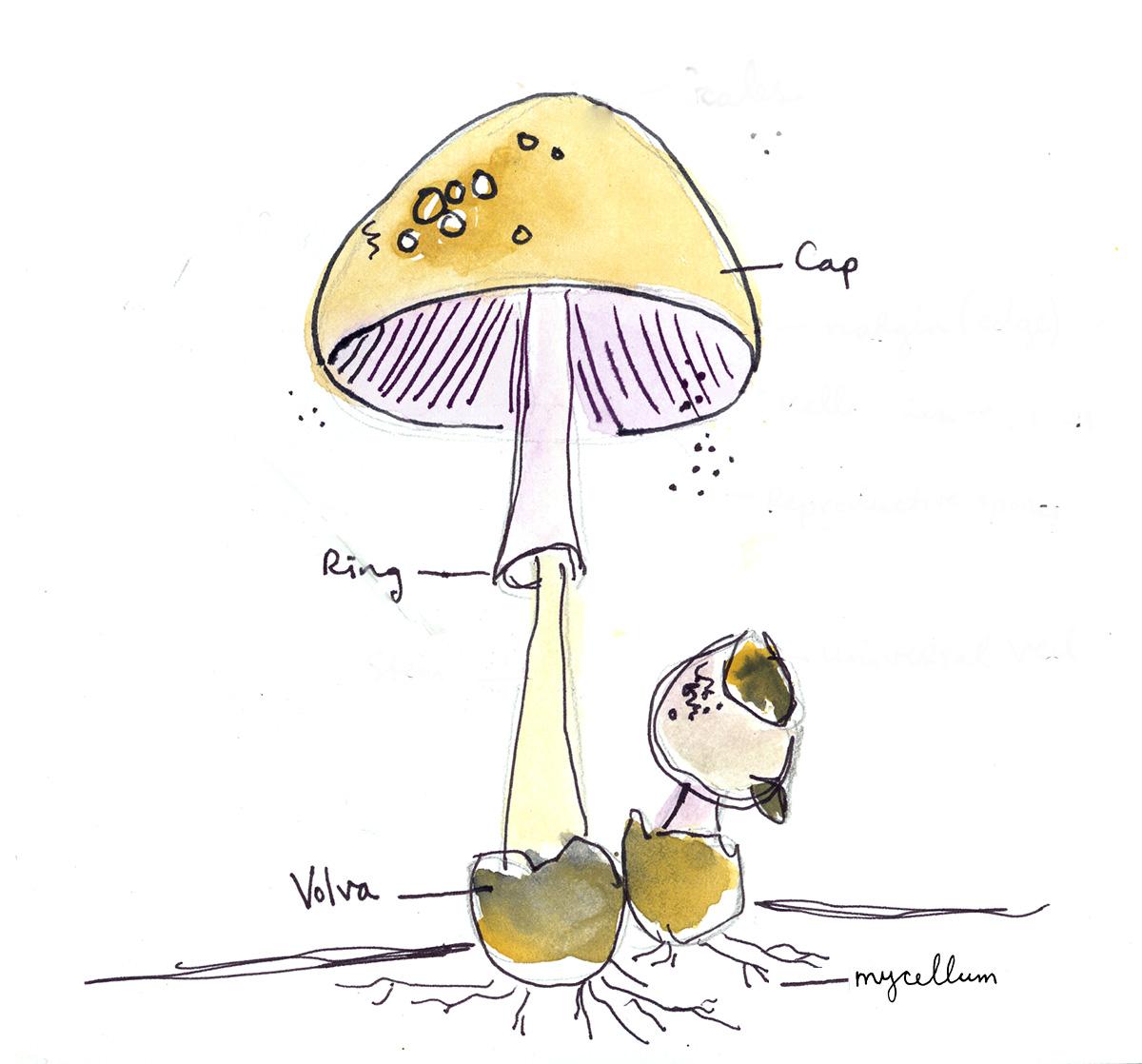 Illustration by Ashley Barlow.