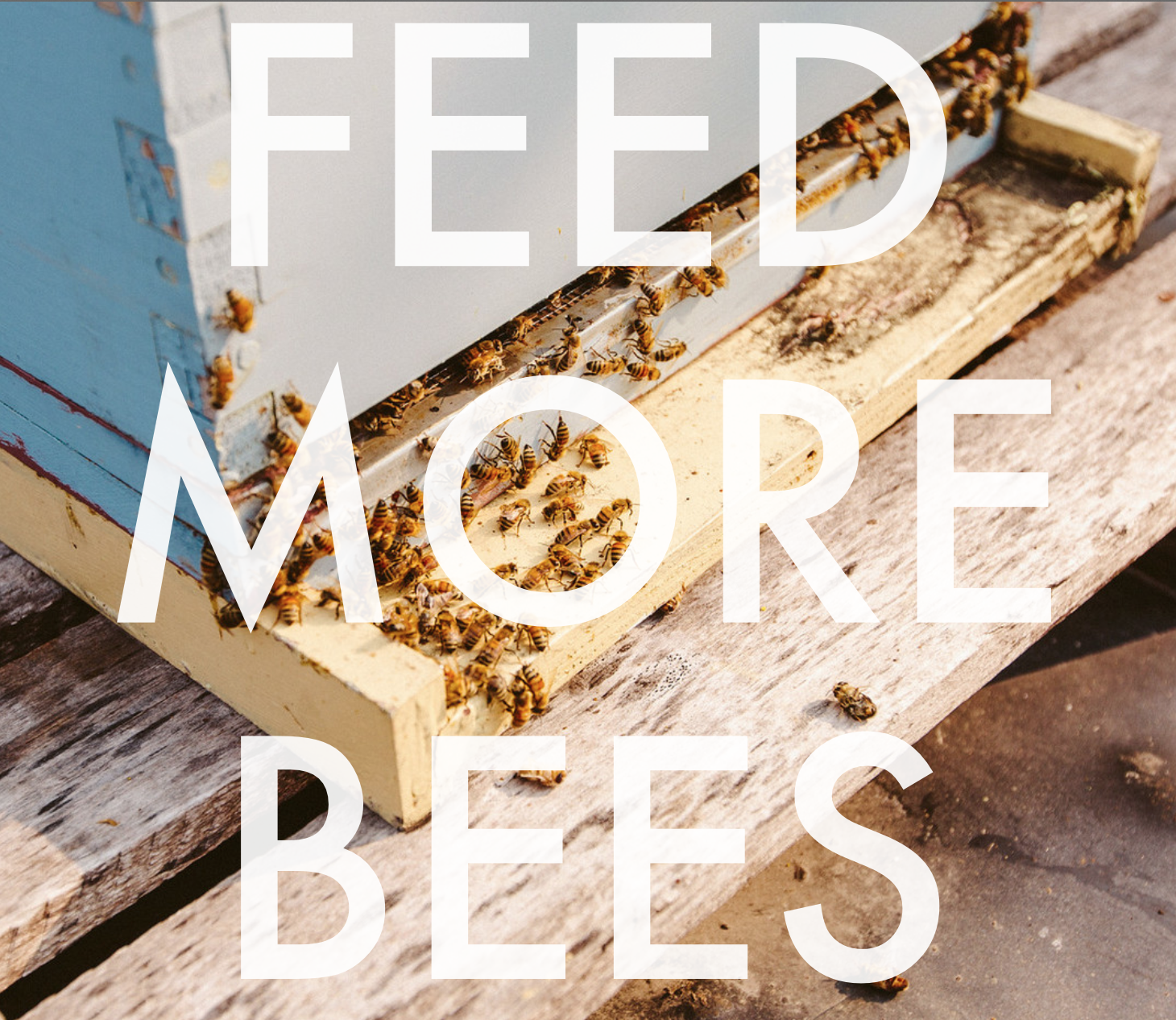 Use the hashtag #feedmorebees to have your favorite pollinator friendly plants added to our guide!