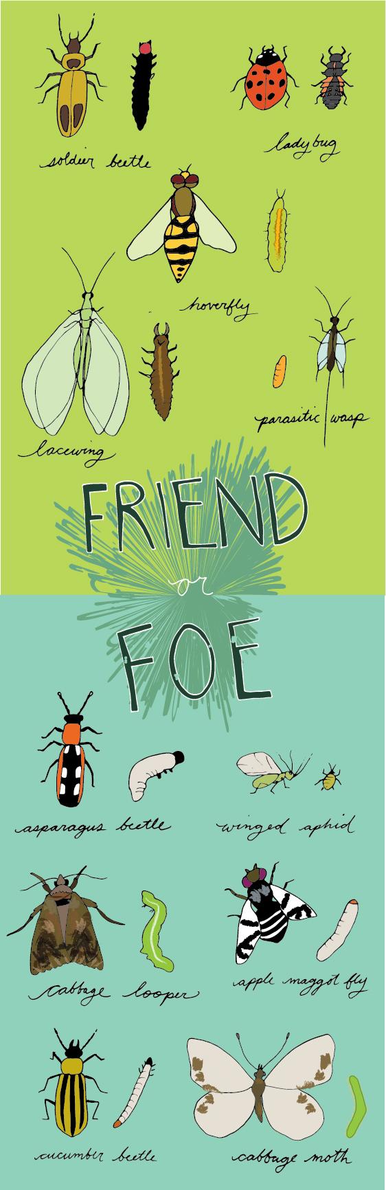 Original Illustration Provided by  Rachel Rolseth