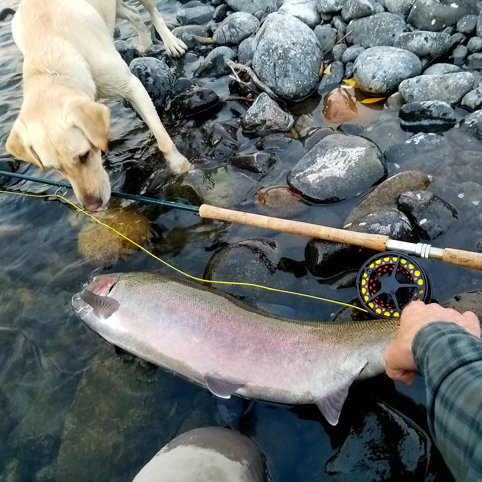 White Pine Outfitters - Guides | Gear Exchange | Fly ShopCheck out their guided fishing trips, fly fishing gear, and quality used and new outdoor equipment. They're encouraging a healthy lifestyle, via outdoor recreation.309 S Main St, whitepine-outfitters.com, (208) 883-3900