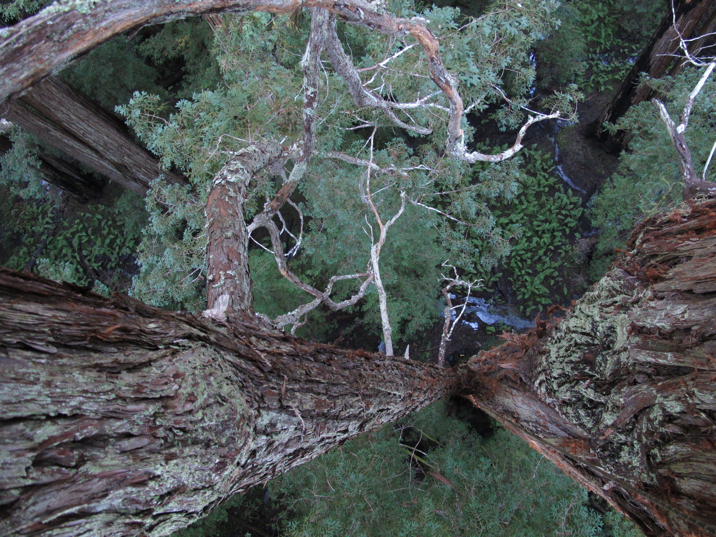 A note on tree climbing -