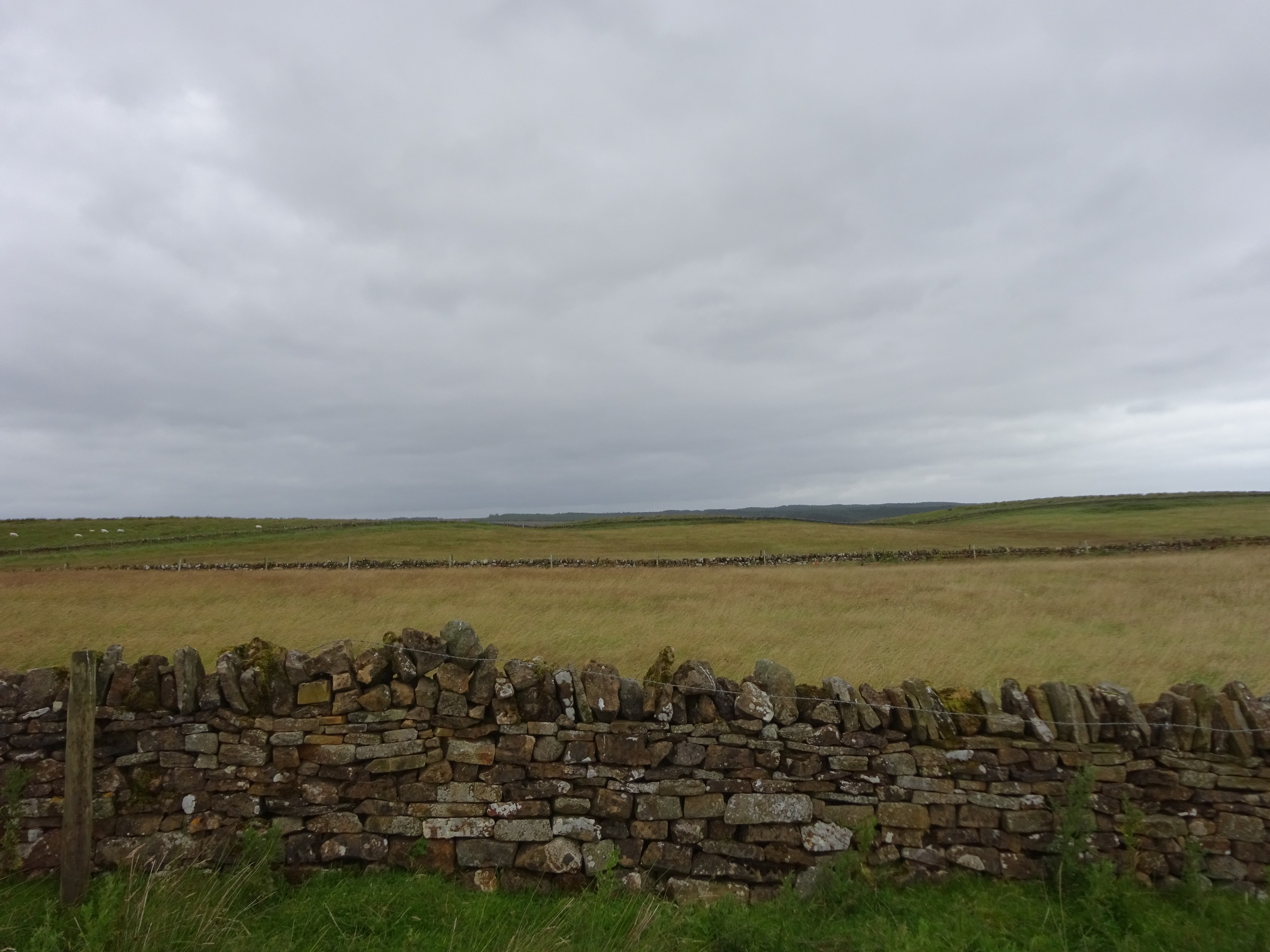 Fields near Hadrians wall