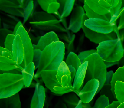 green plant.png