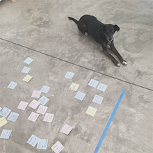 Lucky - DoorbellCircle TurnerOffice GreeterBet Small Dog