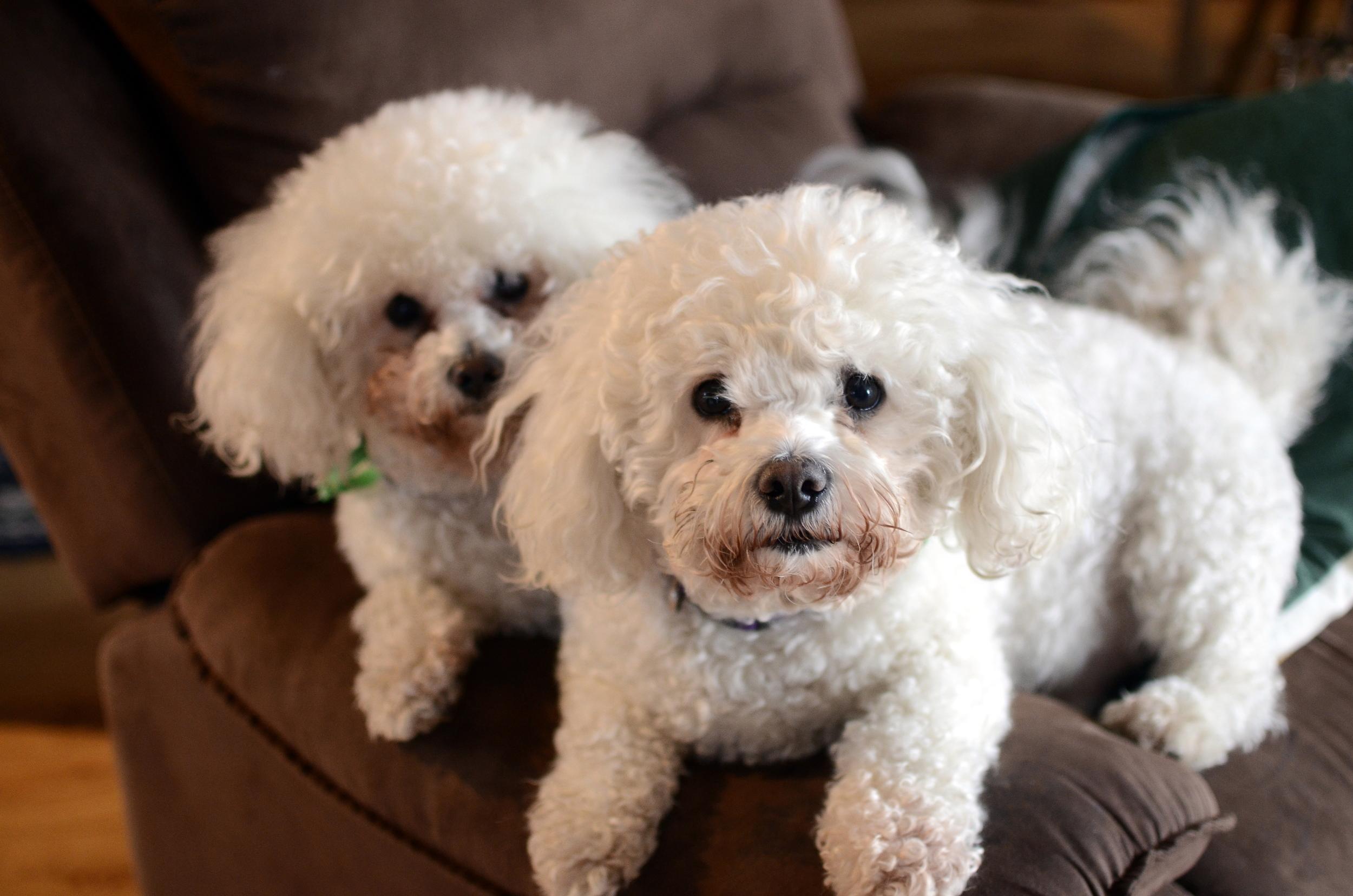 400 Christchurch Chris' Dogs.jpg