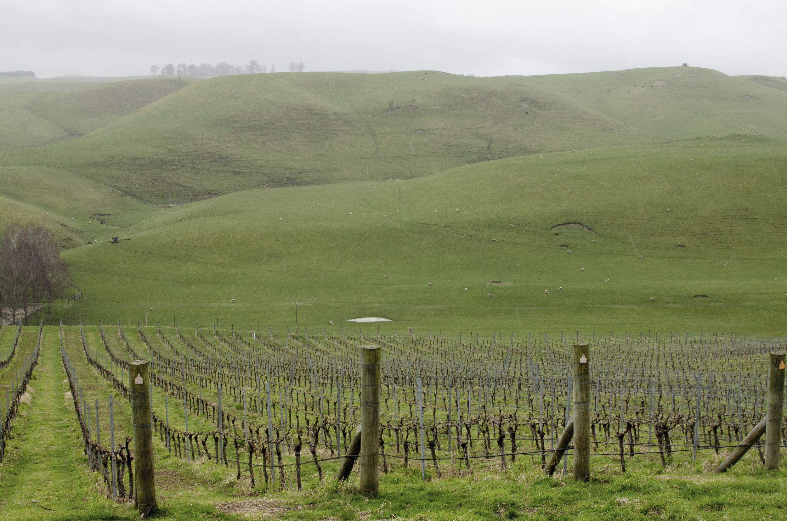 172 Vineyards - Lime Rock.jpg