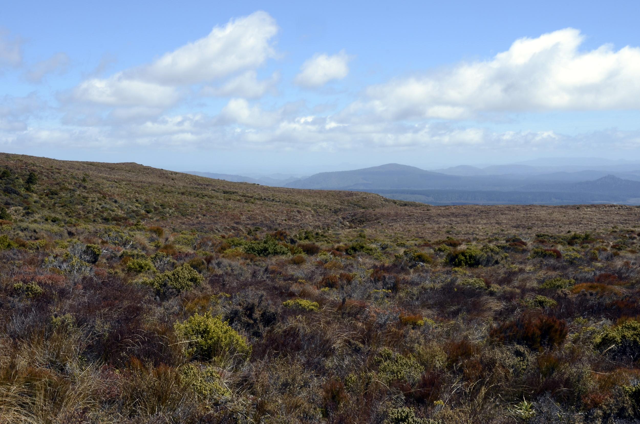 590 Tongariro Landscape.jpg