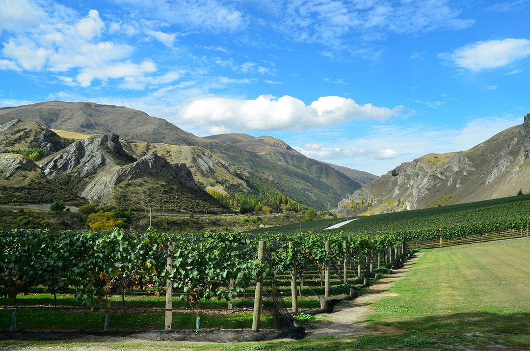500-Chard-Farm-From-Winery.jpg