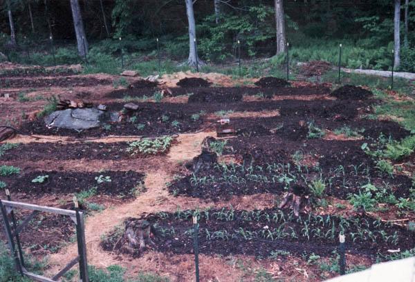 garden 1a.jpg