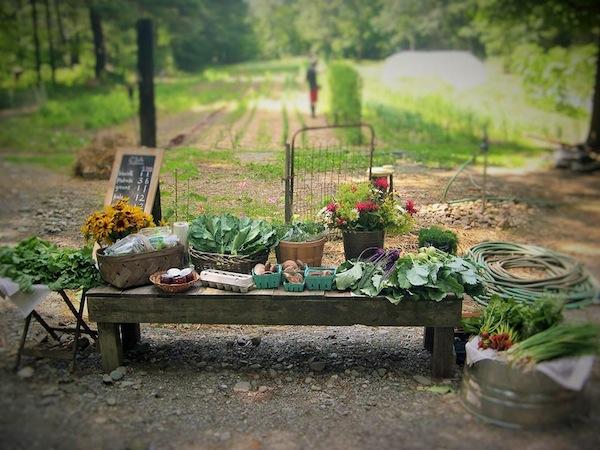 UPRISING FARM