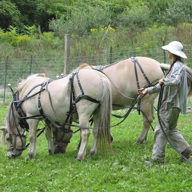horsesA_edited-1.jpg