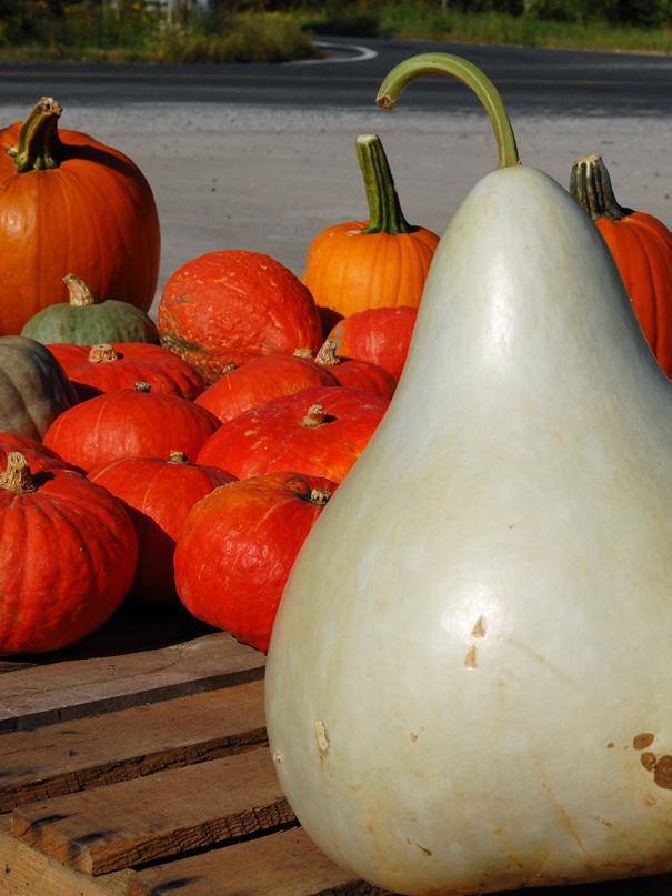 Gourds1809a.jpg