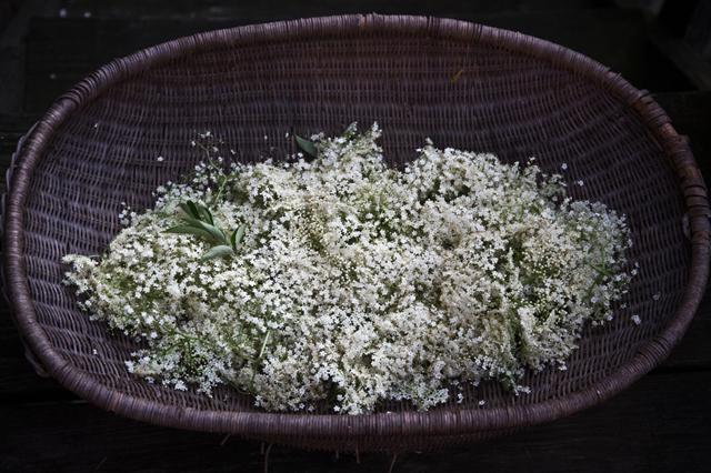 elderflowers2.jpg