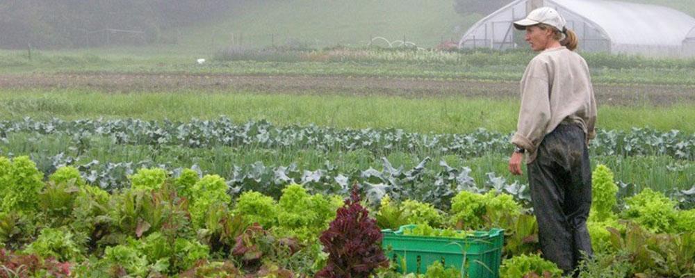 Indian+Line+Farm+Liz2.jpg