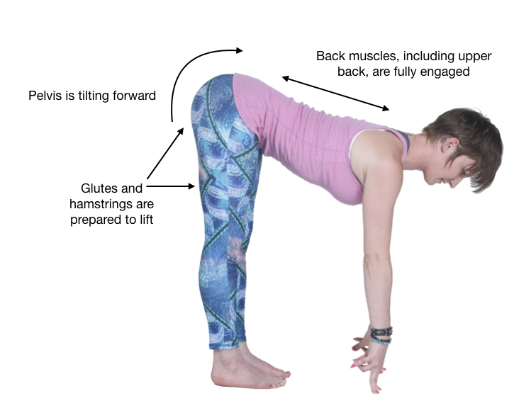 Image: Flat back showing the engagement of the back muscles, forward tilt of the pelvis, glutes and hamstrings ready to lift.