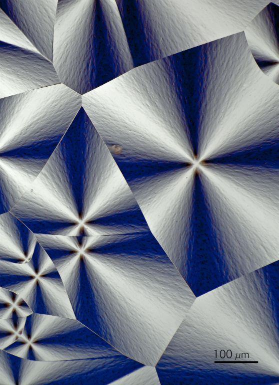 AdvMicroscopy-195-Edit-Edit.jpg