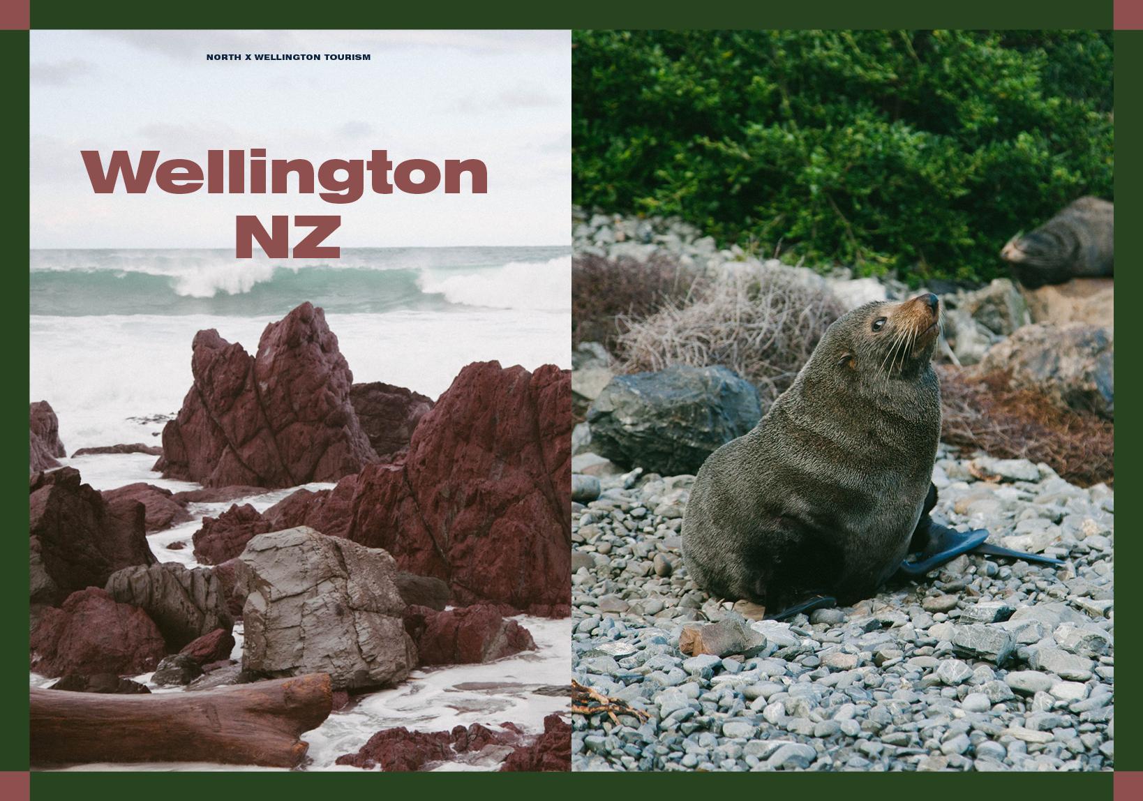 northi14p52 56 Wellington.jpg
