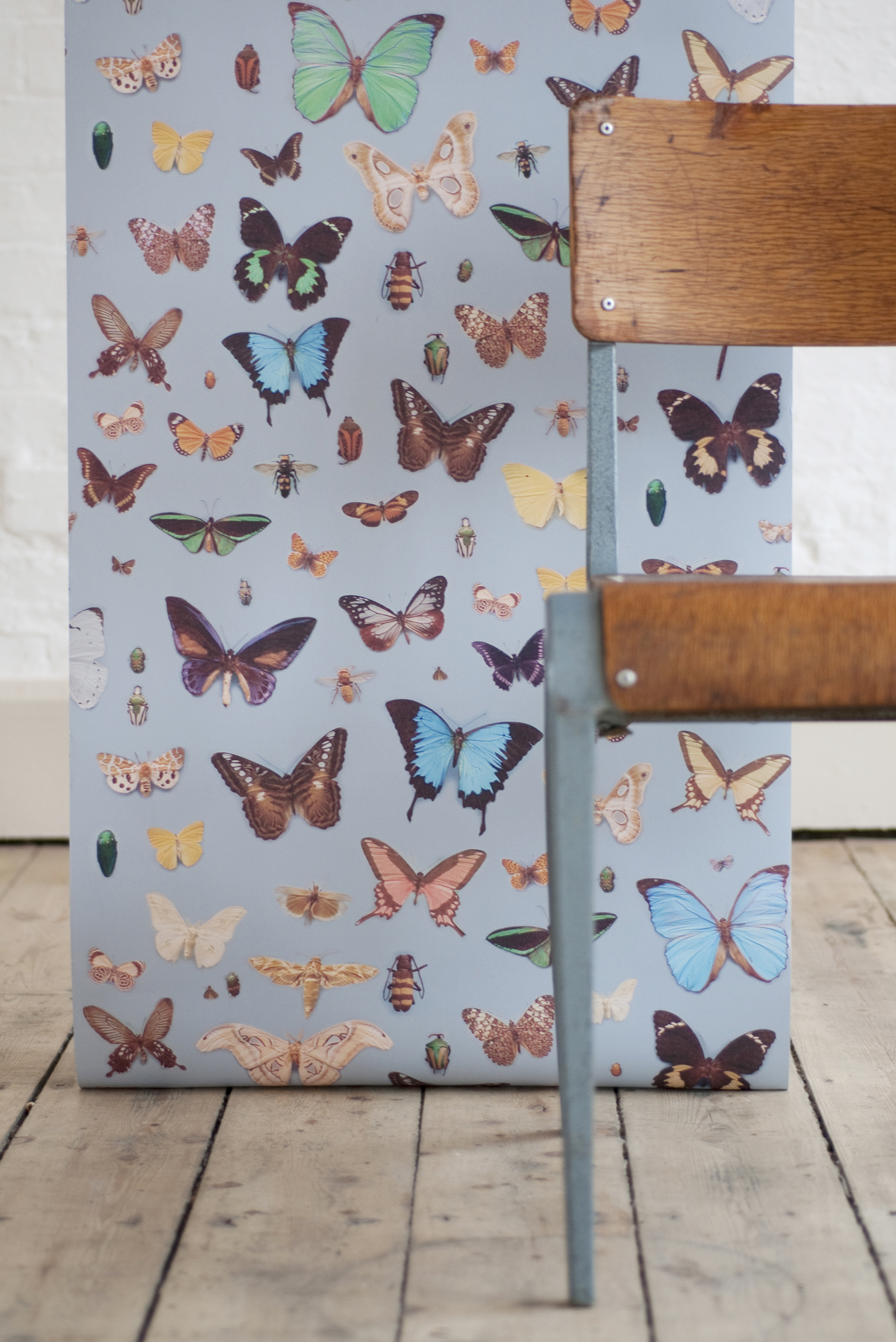 Bugs and Butterflies Wallpaper © Ella Doran