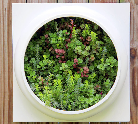 Living Wall from nevastarr