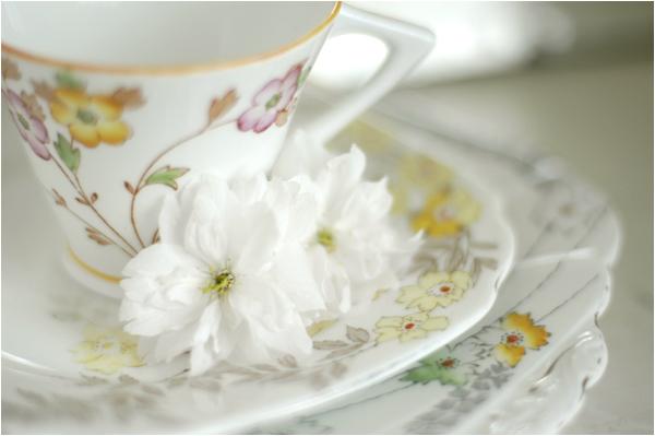 teacupweb