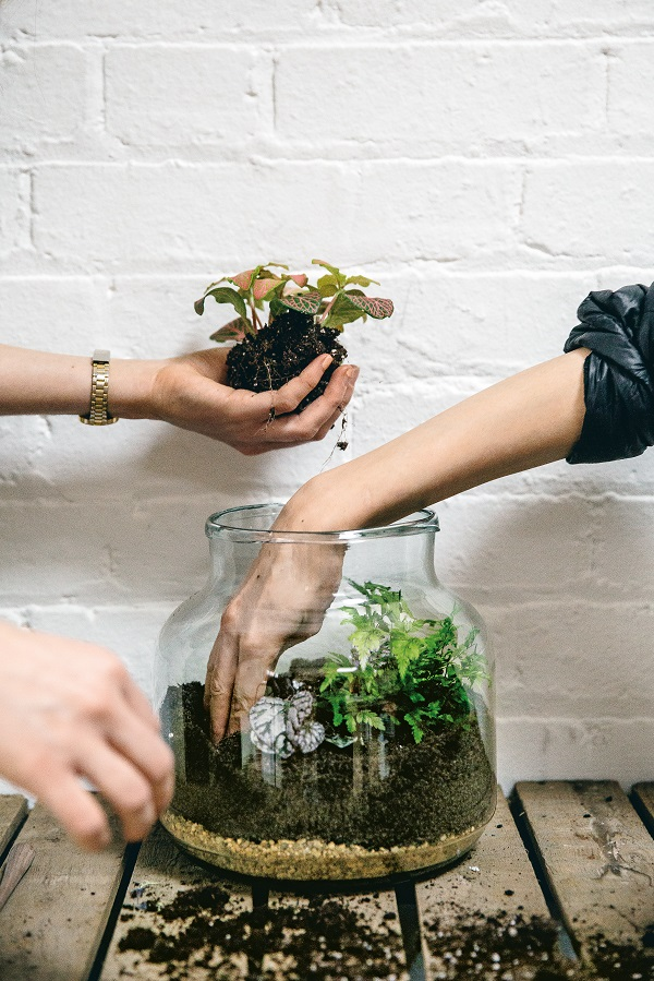 How to make a mini glasshouse terrarium from House of Plants by Caro Langton and Rose Ray (4).jpg