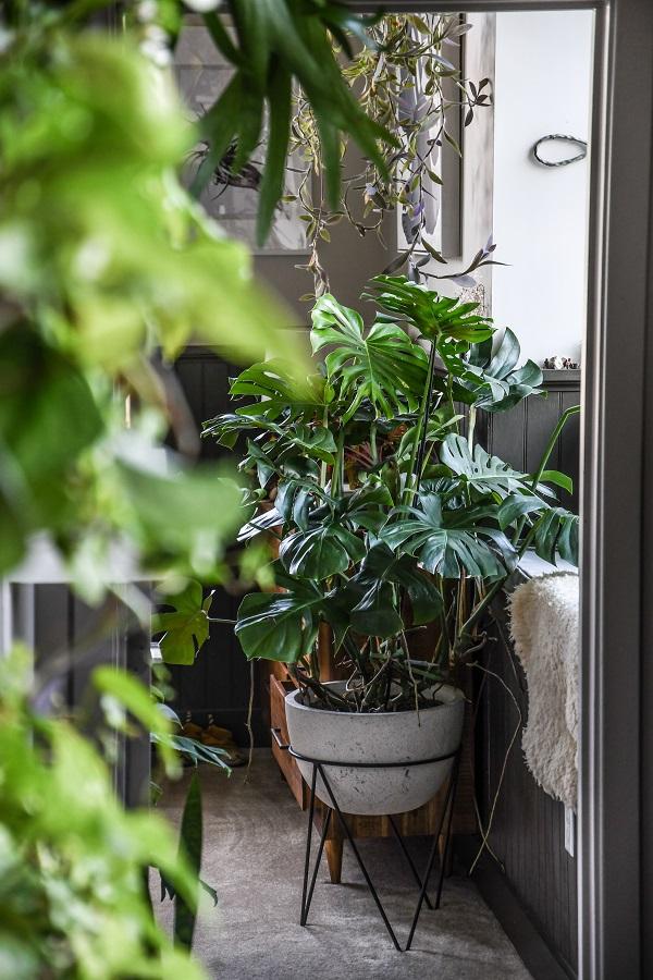 Jungle of Love from Wonder Plants 2 - copyright Hilton Carter (1).jpg