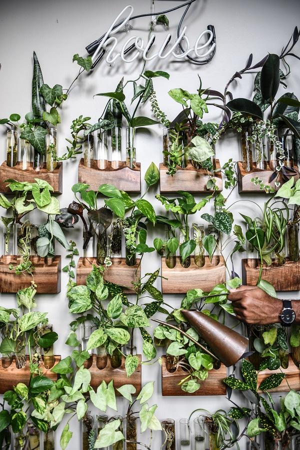 Jungle of Love from Wonder Plants 2 - copyright Hilton Carter (3).jpg