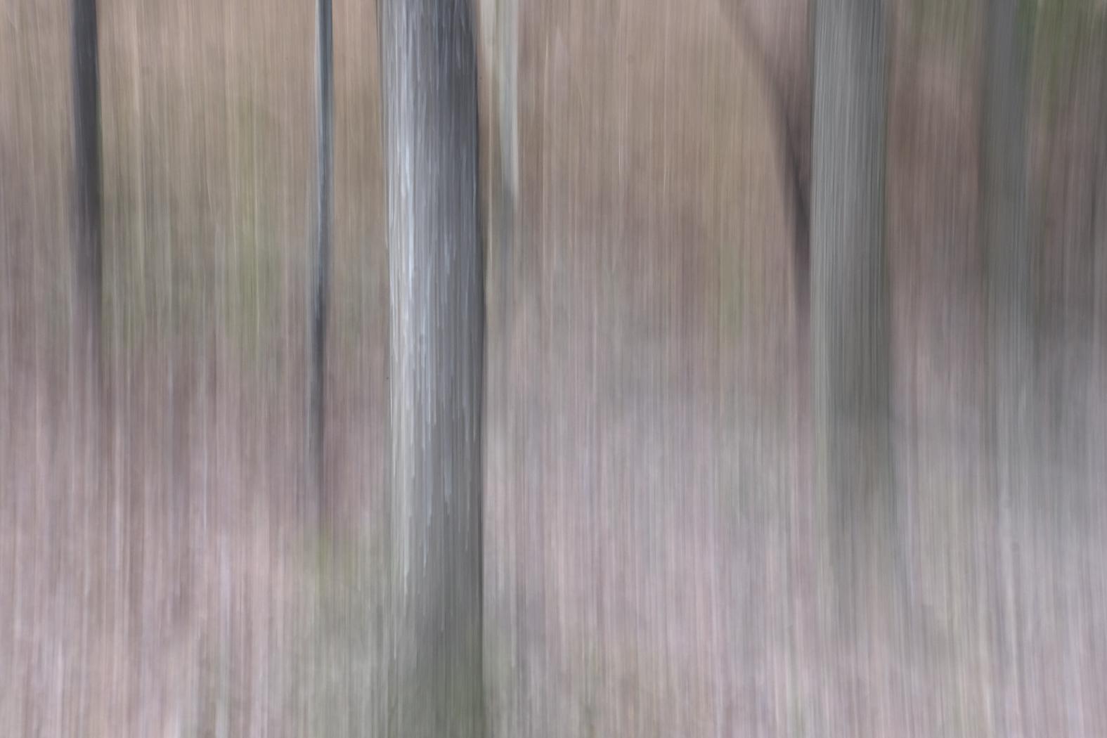 woodlands_#2.jpg