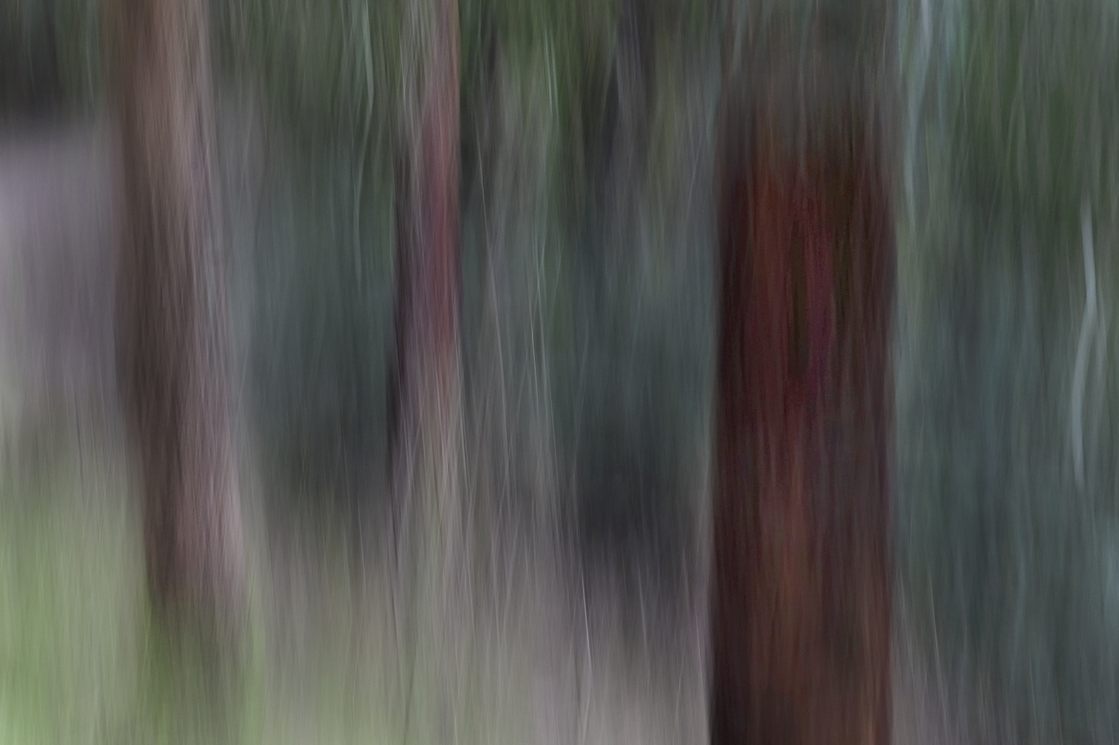 woodlands_#3.jpg