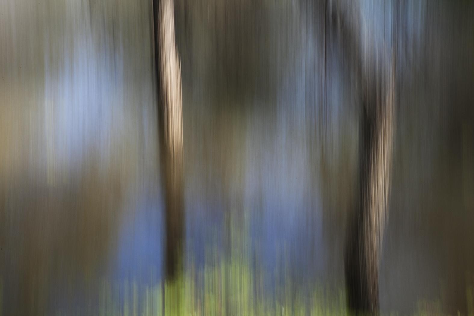 woodlands_#5.jpg