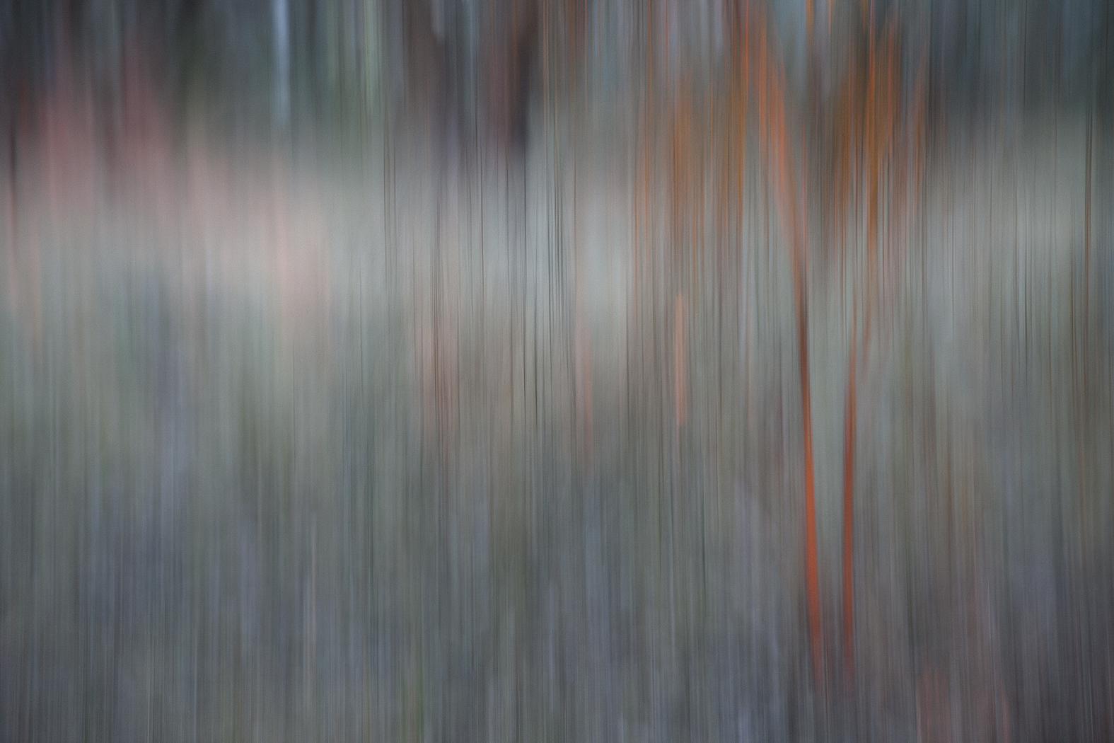 woodlands_#6.jpg