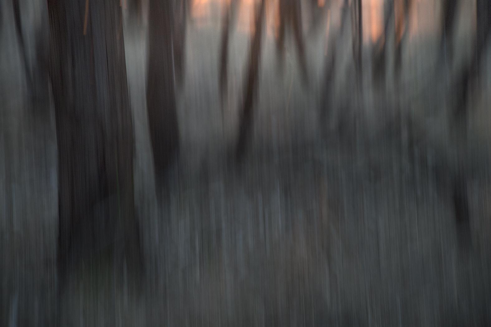 woodlands_#7.jpg