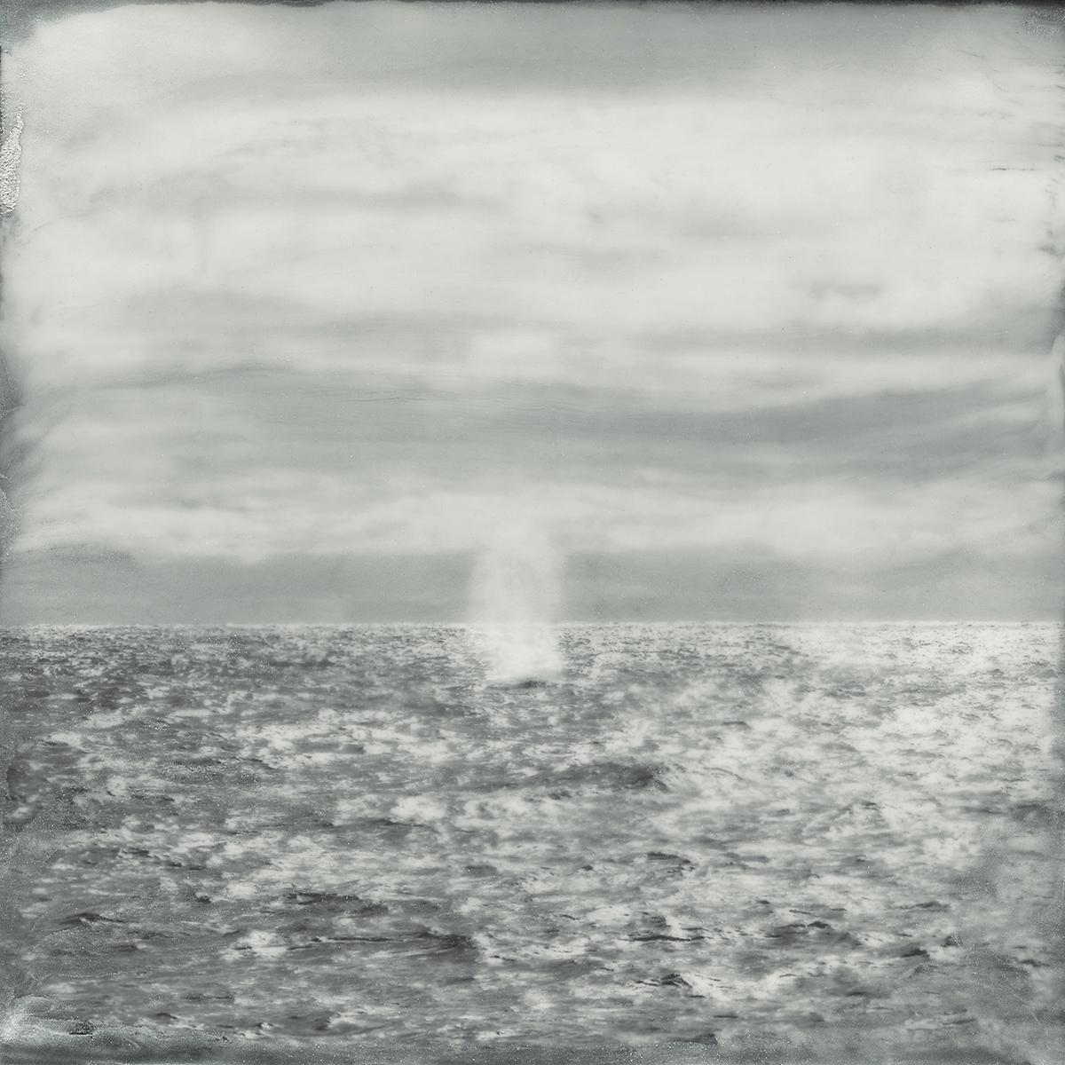 White Whale Spray