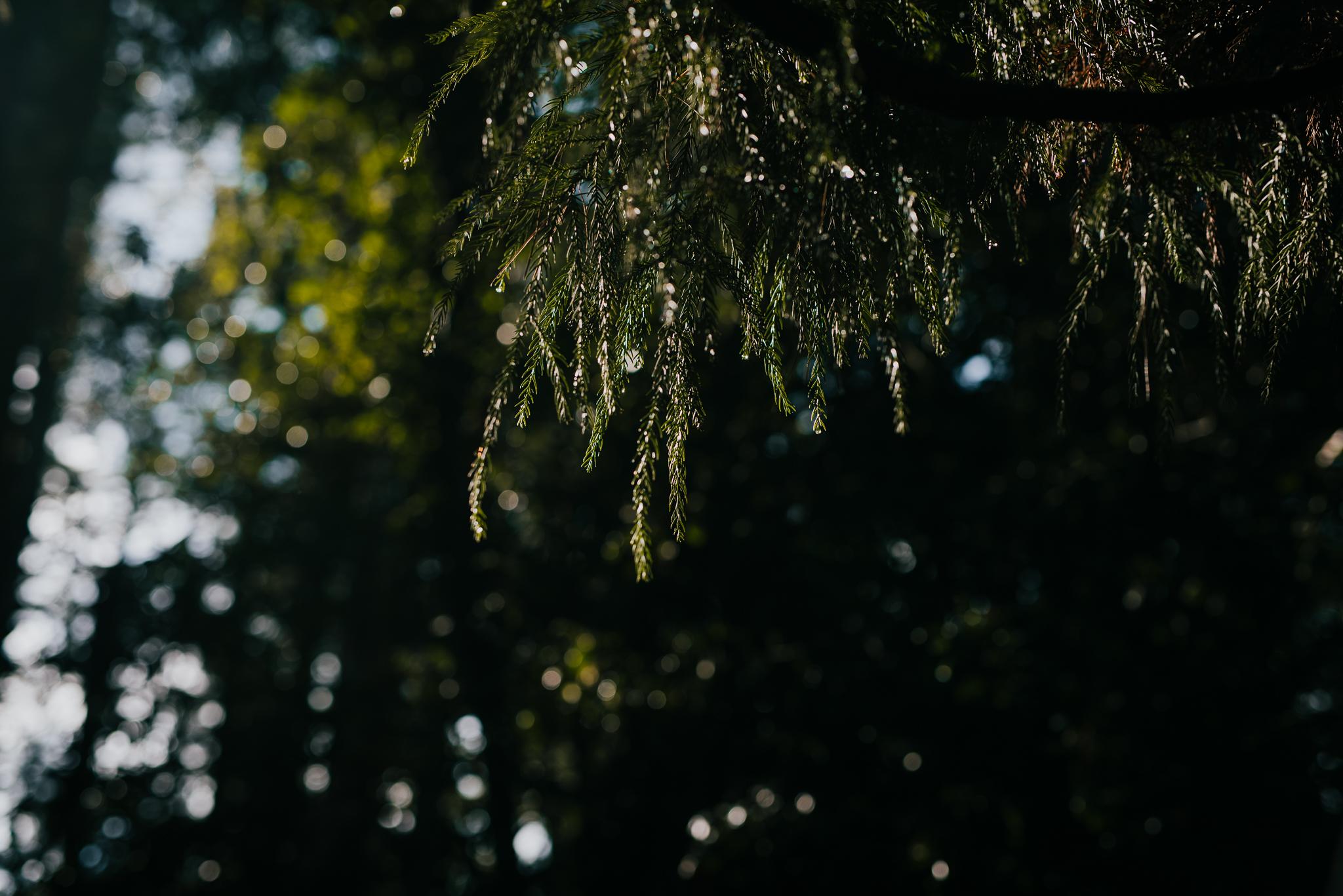Forest DIY wedding_Lee and Steve_Ferny Creek reserve_-27.jpg