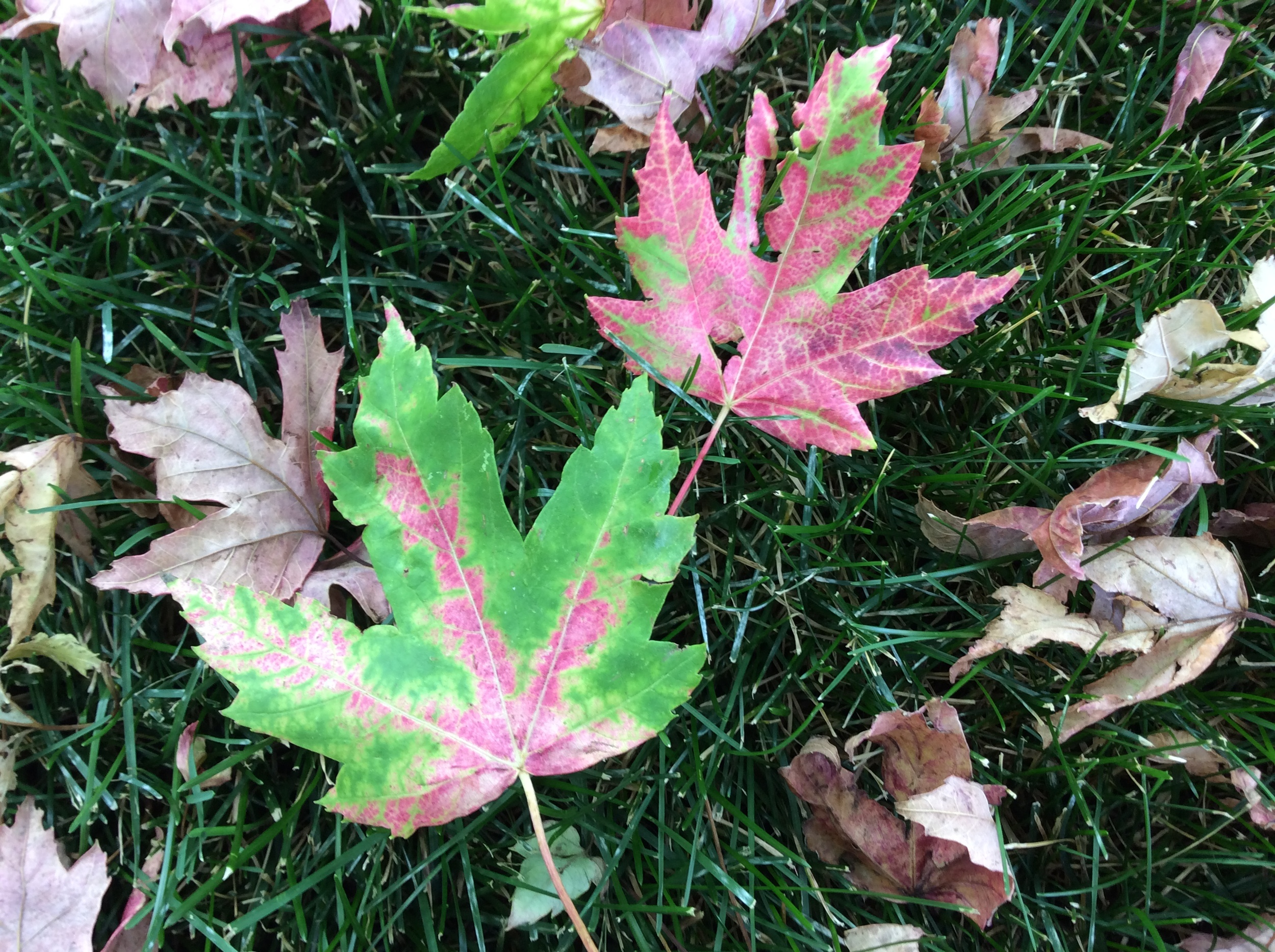 It is starting to look like fall in my backyard!