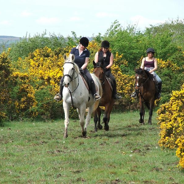 Equestrian-Horse-Riding-in-Boyle