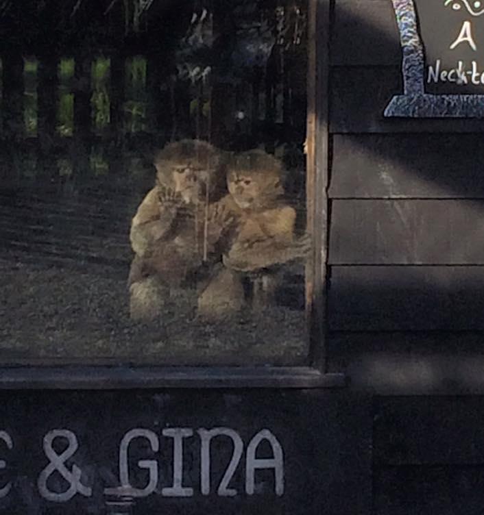 monkey 1.jpg